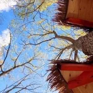 La Paz Trees